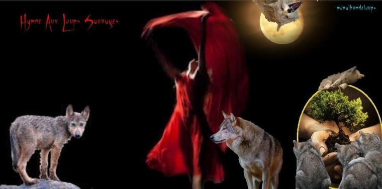 Un homme parmi les loups » de Shaun Ellis