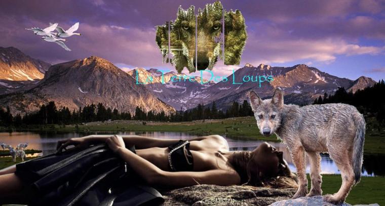 Le loup possède un système de reproduction original...