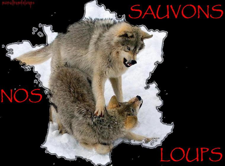 Pendant des siècles, le loup a été l'un des plus terrifiants croque-mitaines des légendes populaires. Pourtant, cet animal intelligent ne mérite pas une aussi sinistre réputation .