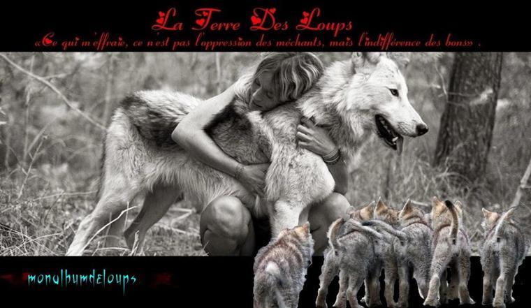 Le loup est un animal égaré dans un monde qui lui est étranger et incompréhensible