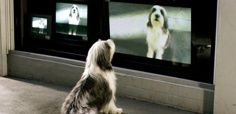 Que voit un chien quand il regarde la télévision ???