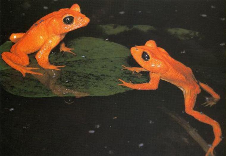 Biodiversité : vers une sixième extinction ???