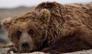 Les animaux emblématiques de Mongolie...