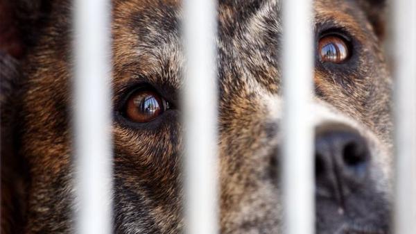 Faites entendre la voix des animaux réduits au silence ahérez , luttez, signez les pétitions avec tous les défenseurs et organismes pour la défence animale ...