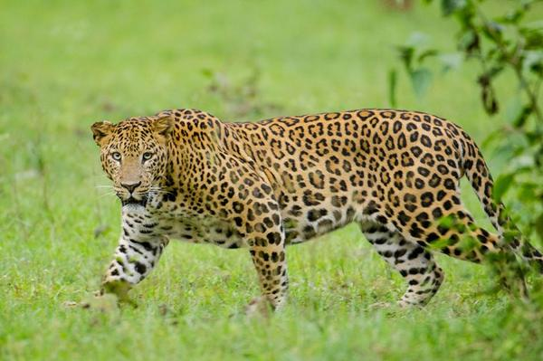 Quels sont les prédateurs du loup ???? Quels sont les prédateurs les plus meurtriers au sein du règne animal ? ???