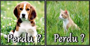 Chien perdu que faire ? Chat perdu que faire ?  Comment retrouver son chien ? Comment retrouver son chat ? Voilà plusieurs jours, semaines, voire plusieurs mois que votre petit compagnon est devenu un chien disparu ou un chat disparu et que vous ne savez plus que faire. Le plus vite vous agissez, le mieux c'est. Retrouver un chien perdu ou retrouver un chat perdu après plusieurs mois d'absence est possible ; des démarches supplémentaires peuvent vous aider à le retrouver. Comment retrouver un chien perdu ??? Comment retrouver un chat perdu ??? Voici les démarches à faire...
