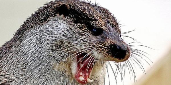 Urgences de la faune sauvage