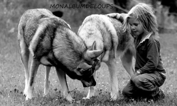 """Il me semble que le monde naturel est la principale source d'excitation ; la plus grande source de beauté visuelle ; la plus grande source d'intérêt intellectuel. C'est la plus grande source de tellement dans la vie qui rend la vie digne d'être vécue.  il est temps de relever le Défi Écologique !!! Quand les loups """"apprivoisent"""" les humains.....  Notre Terre mère, politisée, clôturée, empoisonnée, témoin de la violation systématique des droits fondamentaux, nous exige d'agir en protégeant nos loups et notre faune !!!!!."""