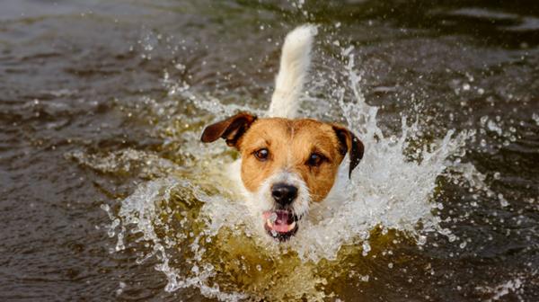 7 dangers qui menacent votre animal en vacances :