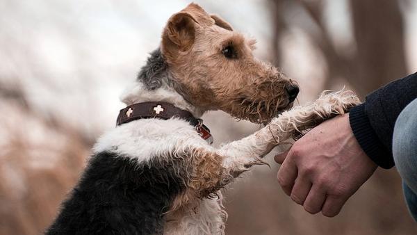 Ce que votre chien veut vraiment vous dire…