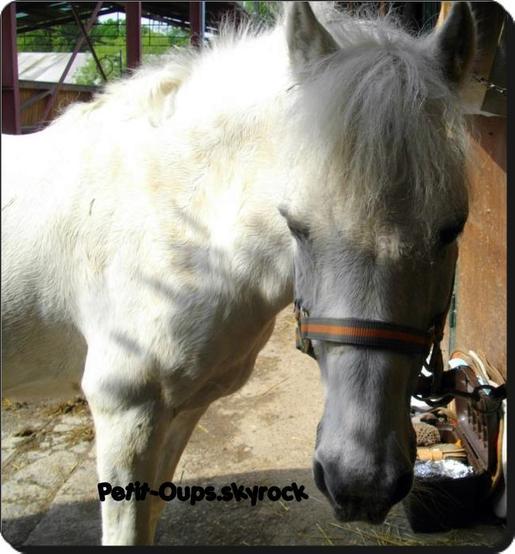 <<L'amitié entre un poney et un cavalier c'est ce qu'il y'a de plus beau au monde >>