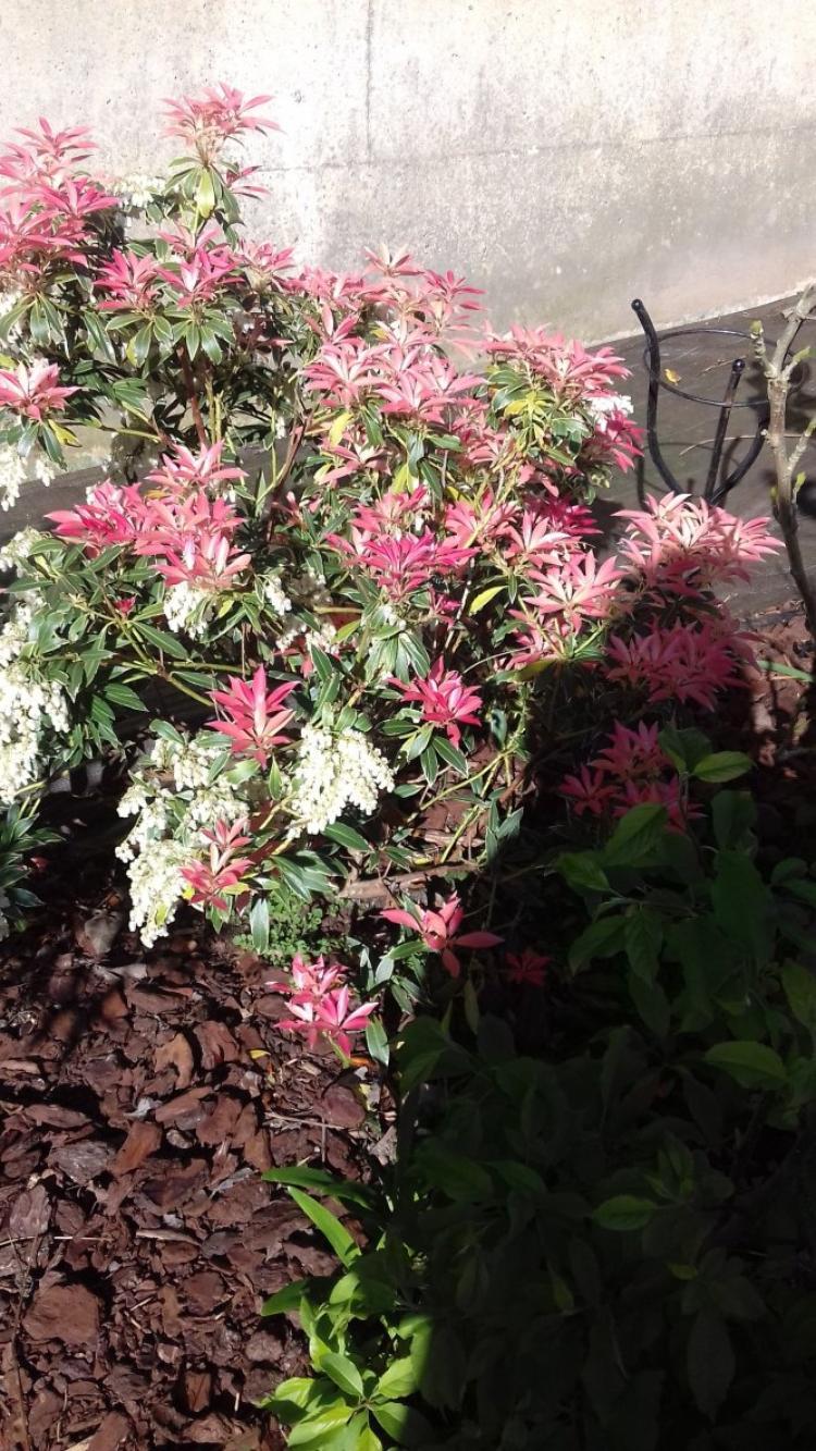 voila le jardin qui commence a prendre des couleurs avec les premieres fleurs