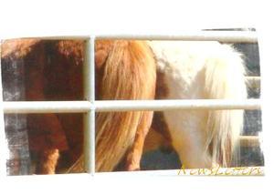 New Letter. « L'air du paradis est celui qui souffle entre les oreilles d'un cheval. »