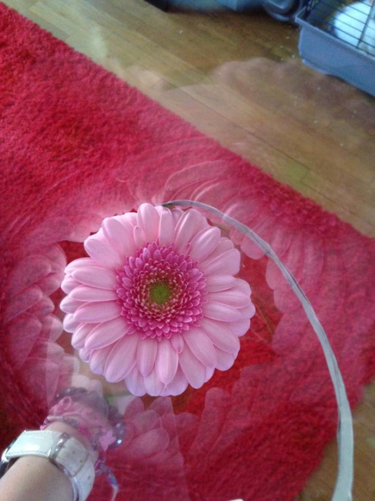 Ma fleur favorite *-*
