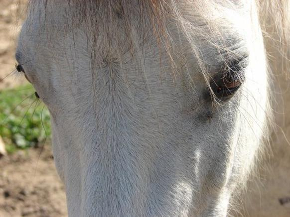 """""""Si un jour on tombe mon cheval et moi, relevez d'abord mon cheval."""" ♥"""