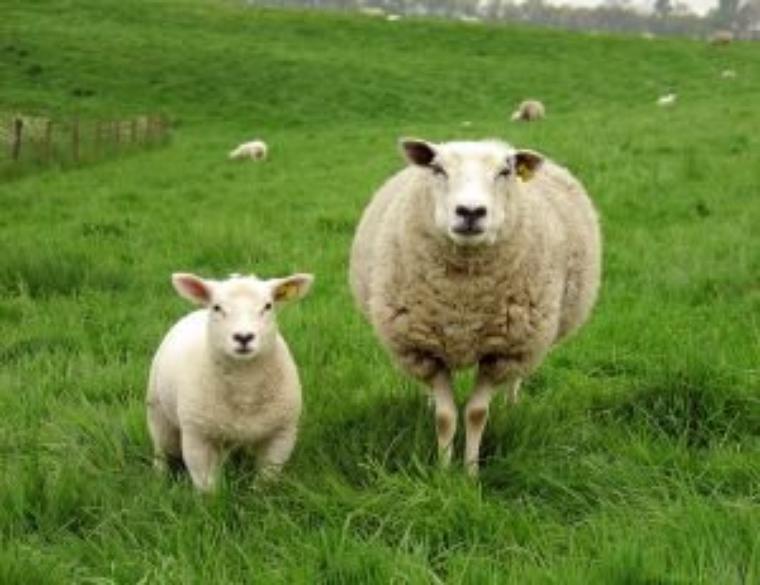 .Pas loin d'un mas provençal  dans la fôret de palayzon,dans les maure un petit troupeau de mouton , broutaient de ci de là les brin d'herbe au saveur de la provence. Le berger viens  tous les soir pour voir ses petits protégés, et ne s'apercevant pas qu'un petit mouton lui manqué, très désobéissant notre fugitif c'était perdu dans la forêt.........mais non !!!!! Il se cache pour découvir le mystère de la nuit.Tout doucement il s'enfonce dans les bras de la forêt de palayzon. La peur au ventre , voilà au beau milieu d'un monde irréel , les arbres murmurent les animaux de la nuit papotent. la lune et les étoiles commencent a briller dans le ciel sépia.. Me voici bien seul , je n'aurai jamais du partir loin de ma maman, de mes amis, puis le silence se fit, notre petit mouton tremble de peur et se blottie prés d'un églantier qui sommeillait doucement.  Il rencontra une jolie plante oui moi l'églantier jolie fleur « si un jour dans ce pays , On songe à m'ériger un monument, Je donne mon accord à cet honneur A une seule condition - ne pas l'ériger Près de la mer où je suis née : Le dernier lien est rompu avec la mer, Ni dans les jardins du tsar près de la souche secrète, Où une ombre me cherche, inconsolée, Mais ici, où j'ai veillé trois cents heures Sans qu'ils ouvrent pour moi les verrous. » Splendeur nouée de Requiem, l'½uvre majeure de la poétesse , Bleu nuit à l'extérieur, comme l'existence lumineux et ciselé à l'intérieur, comme sa poésie, le recueil qui paraît aujourd'hui constitue un monument contemporain d'une grande beauté. Les deux traducteurs ont su retranscrire la dualité amère de cette écriture unique, où le pressentiment morbide se mêle à l'insouciance ondoyante. entre une jeunesse frénétique et ombrageuse dans cette forêt pré révolutionnaire « Et déjà dans ce vent odorant, surchauffé Ma conscience prend feu » et une fin de vie déchiquetée par la terreur ou mes amis qui semblent me connaitre psalmodiait des poèmes qu'elle voulait de plus en plus compacts, 