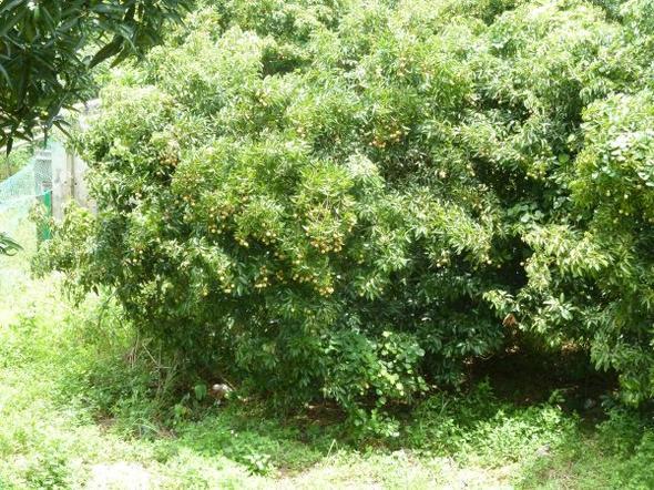 Des fruits, des animaux de compagnie bizares, le Vietnam quoi... le 27-06-2011