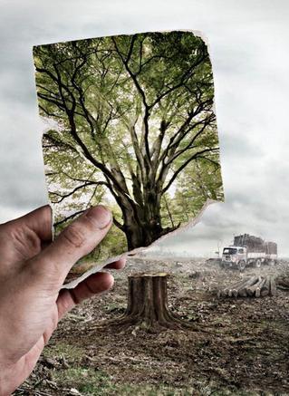 déforestation, une réaction ?