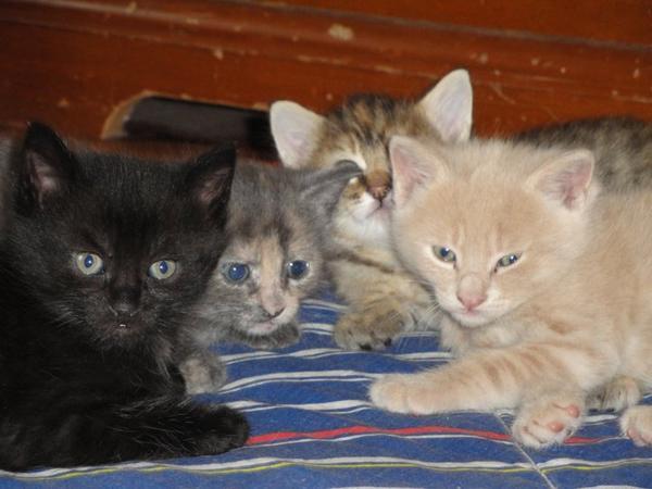 Mes pitits chats qui sont à croquer !
