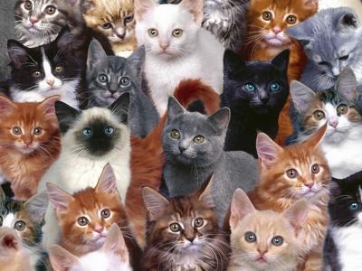 ~Chapitre 10 #Humans-Cats ~