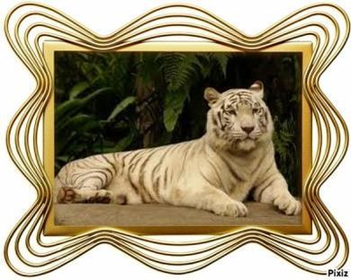 L'histoire du tigre
