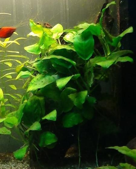 ~ Mes plantes ~