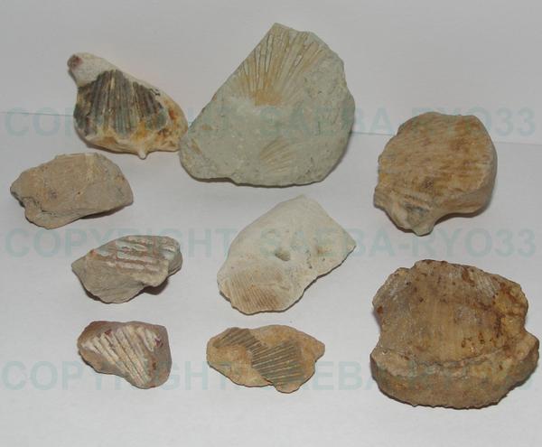 Les Fossiles partie 3