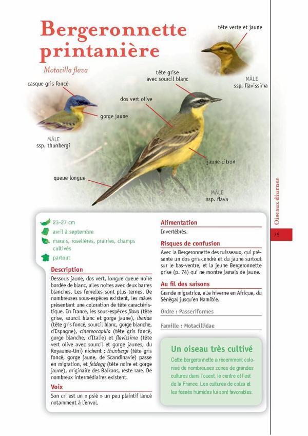 A la découverte des oiseaux...