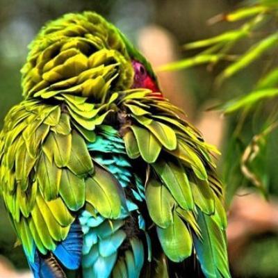 Lien article sur la diversité du plumage de nos oiseaux, par le professeur POMAREDE