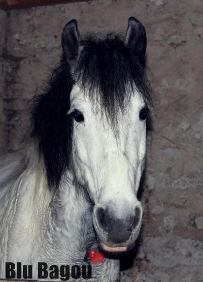 """""""Si mon cheval et moi venions à tomber, vérifiez d'abord qu'il se relève avant de vous occuper de moi, s'il ne se relève pas, Alors laissez moi ..."""""""