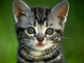 Les chats!!!!