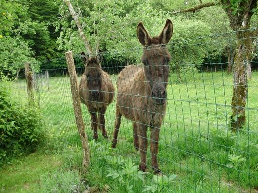 My donkeys