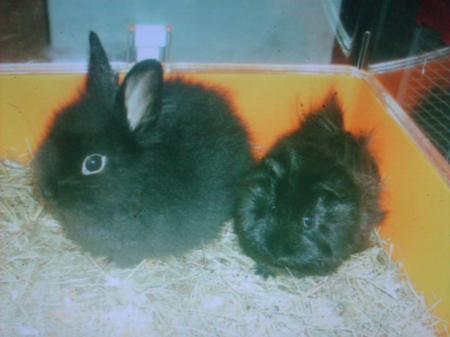 nouvelles fotos de prinsese des lapinous de liliane a dopteé par tendre maman