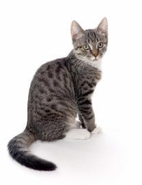 Dlaczego niektóre diety dla kota są nieskuteczne?