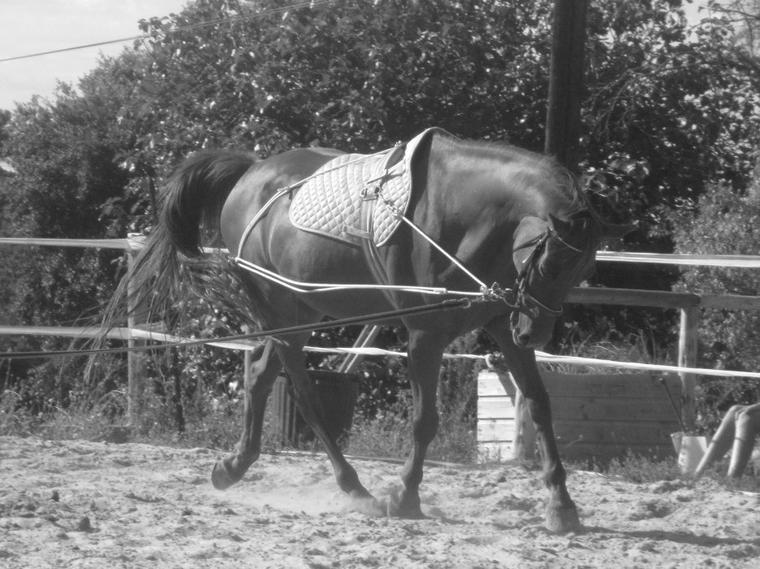 Vente--matos--horse--11