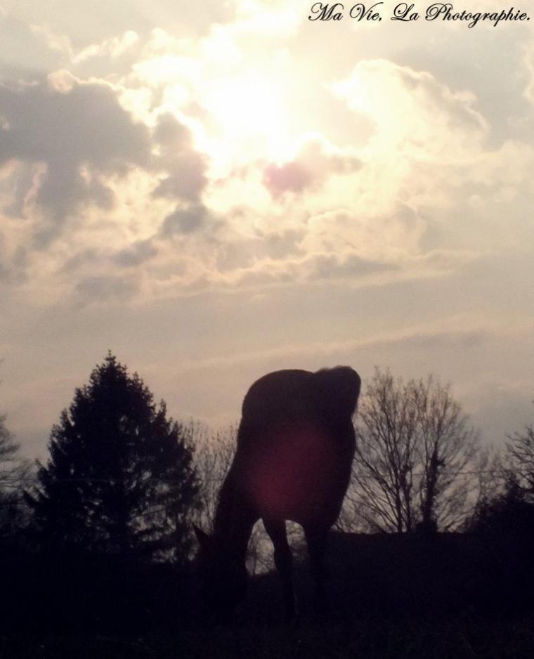 Le Soleil & Le Cheval