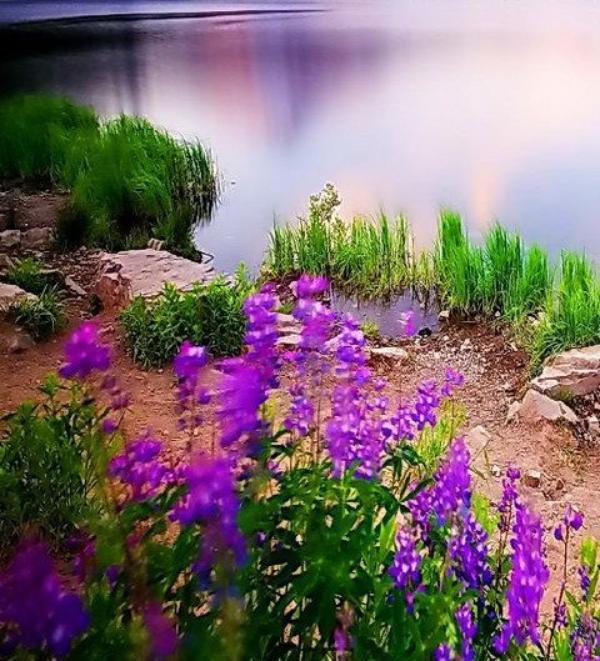 Ces belles étendues d'eaux si agréablement fleuries.