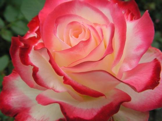 Rosée de septembre.