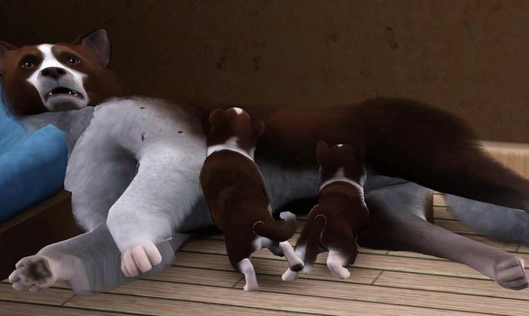 Ashley aménage et deux Border Collie sont nés cette nuit :)