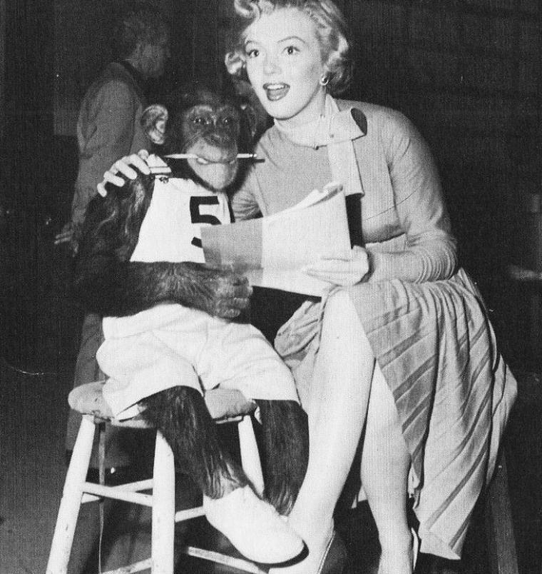 """1952, """"Monkey business"""" (Chérie, je me sens rajeunir) de Howard HAWKS / SYNOPSIS part 3 / ... Edwina le rejoint au laboratoire puis en arrive à boire également le nouvel élixir, suivi d'un verre d'eau évidemment. Elle retombe à son tour en enfance et emmène son Barnaby dans l'hôtel de leur lune de miel. La nuit se termine mal pour lui. Le lendemain, les effets ont disparu chez Edwina. Plus tard au laboratoire, ils prennent les deux du café - beaucoup de café ! - préparé avec l'eau de la fontaine de jouvence. La sarabande peut donc recommencer. D'abord avec le conseil d'administration dont ils sapent la séance. Puis à la maison où, d'une part, une Edwina endormie se réveillera à côté d'un bébé qu'elle prendra pour son mari retourné vraiment en enfance et, d'autre part, Barnaby devient un peau-rouge avec des enfants du quartier qui vont ensemble scalper une victime toute désignée. L'eau du distributeur est jetée après que le grand chef Oxley et les autres scientifiques en ont bu par erreur, puis tout peut rentrer dans l'ordre avec le retour de chacun à la normale.(Peu avant le tournage, Marilyn rencontre Joe DiMAGGIO, fameux jour de baseball, avec lequel elle commence à entretenir une idylle et qui deviendra l'année suivante son second mari ; ce dernier lui rend visite sur le tournage, l'histoire peux commencer... à suivre ! )."""