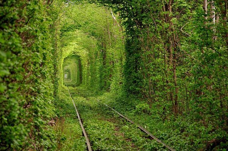 Chemin subime, le tunnel de l'amour en Urkraine, pour vous souhaiter une bonne journée les amis