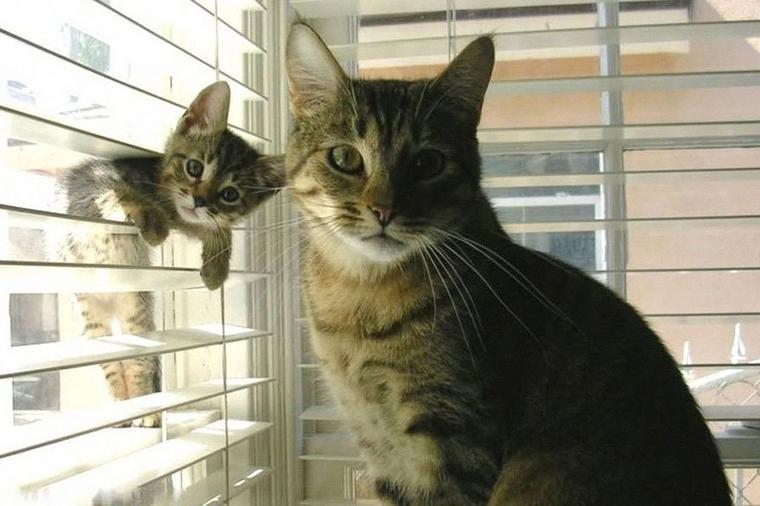 Bon LUNDI  les amis, avec cette jolie photo de chats.