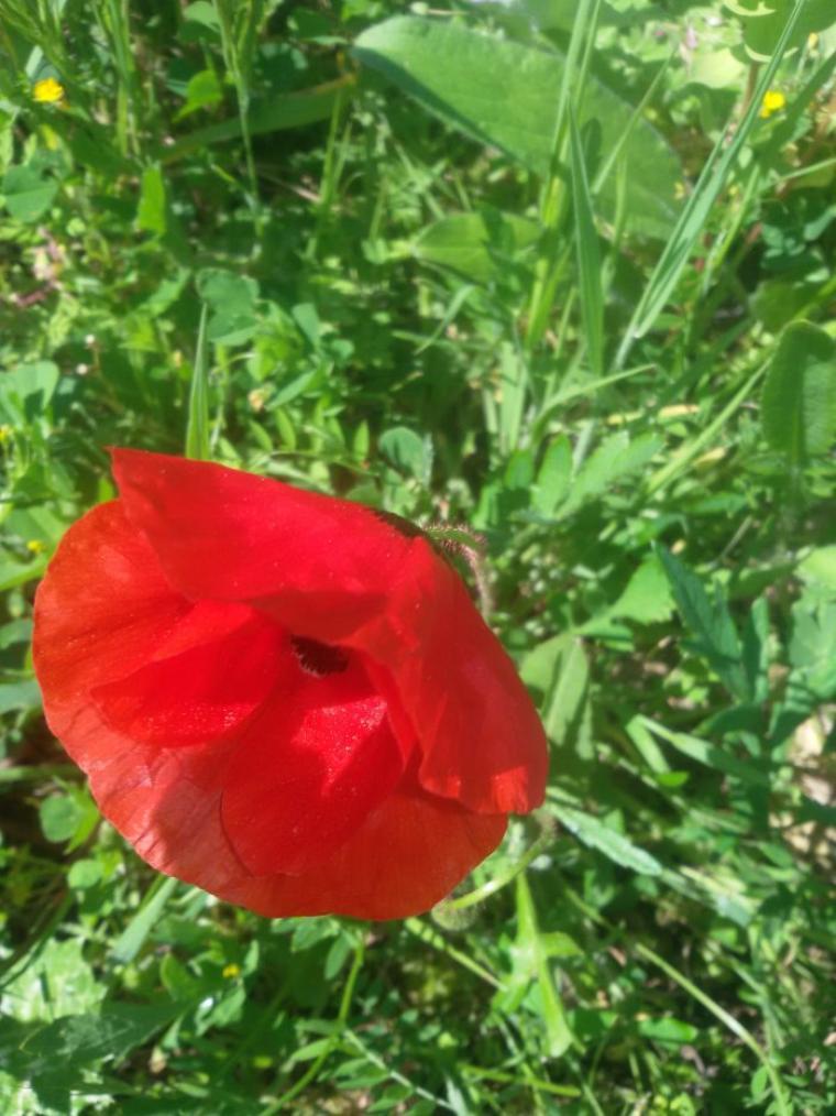 Pas pu passer dans vos jolis mondes hier, tout le quartier a subi une panne d'électricité, mais je vous offre les premières fleurs de mon jardin