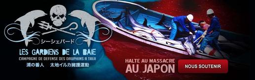 Rejoignez les Gardiens de la baie et aidez-nous à mettre fin au massacre insensé des dauphins à Taiji, au Japon!