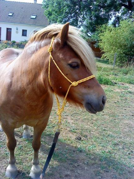 Comment lire le caractère d'un cheval sur sa tête ?