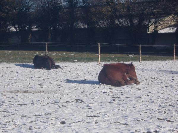 """""""Les chevaux ne changent ni notre vie, ni nous-même. Ils nous proposent seulement de nous reconnecter à la réalité, à ce que nous sommes. A ce que l'autre est. Et à accueillir cela, sans jugement."""""""