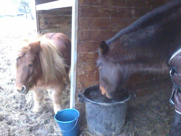 """"""" Le cheval sa ne se regarde pas avec les yeux mais avec le coeur. """""""