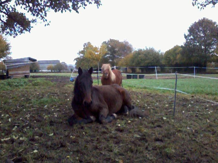 """""""Alors que nous aurions plutôt tendance à garder le meilleur pour la fin ; les chevaux, quand à eux, s'empressent de dévorer la friandise rajoutée à leur ration. Qui a raison ? Les chevaux ont une réaction plus logique : ils profitent du meilleur sans délai. Car le futur, même très prochain, est incertain."""""""