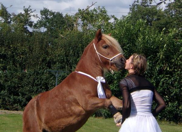 """""""Le cheval, c'est comme le violon, il faut avant tout savoir l'accorder, puis une fois accordé, savoir en jouer juste."""""""
