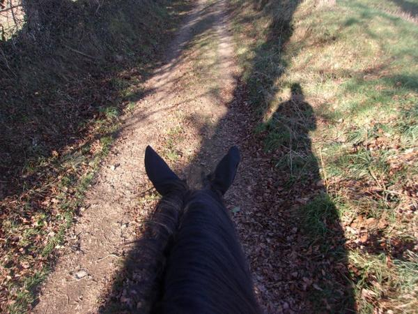 """""""La vie nous confronte à un tas d'épreuves plus ou moins difficiles, le cheval est celui qui nous porte sur son dos pour nous aider à les surmonter."""""""
